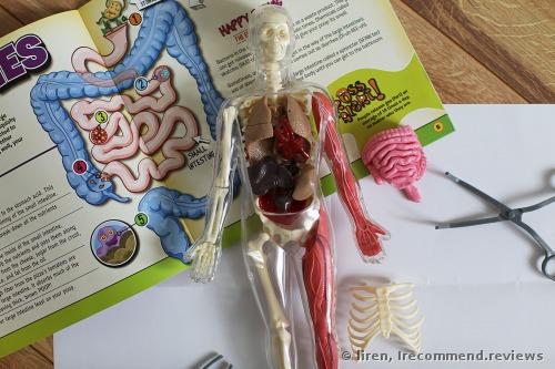 SmartLab Toys Squishy Human Body Educational Toy